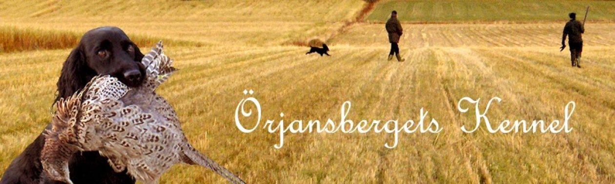 Örjansbergets Kennel